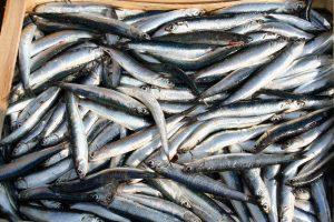 pescato-alici-amalfi